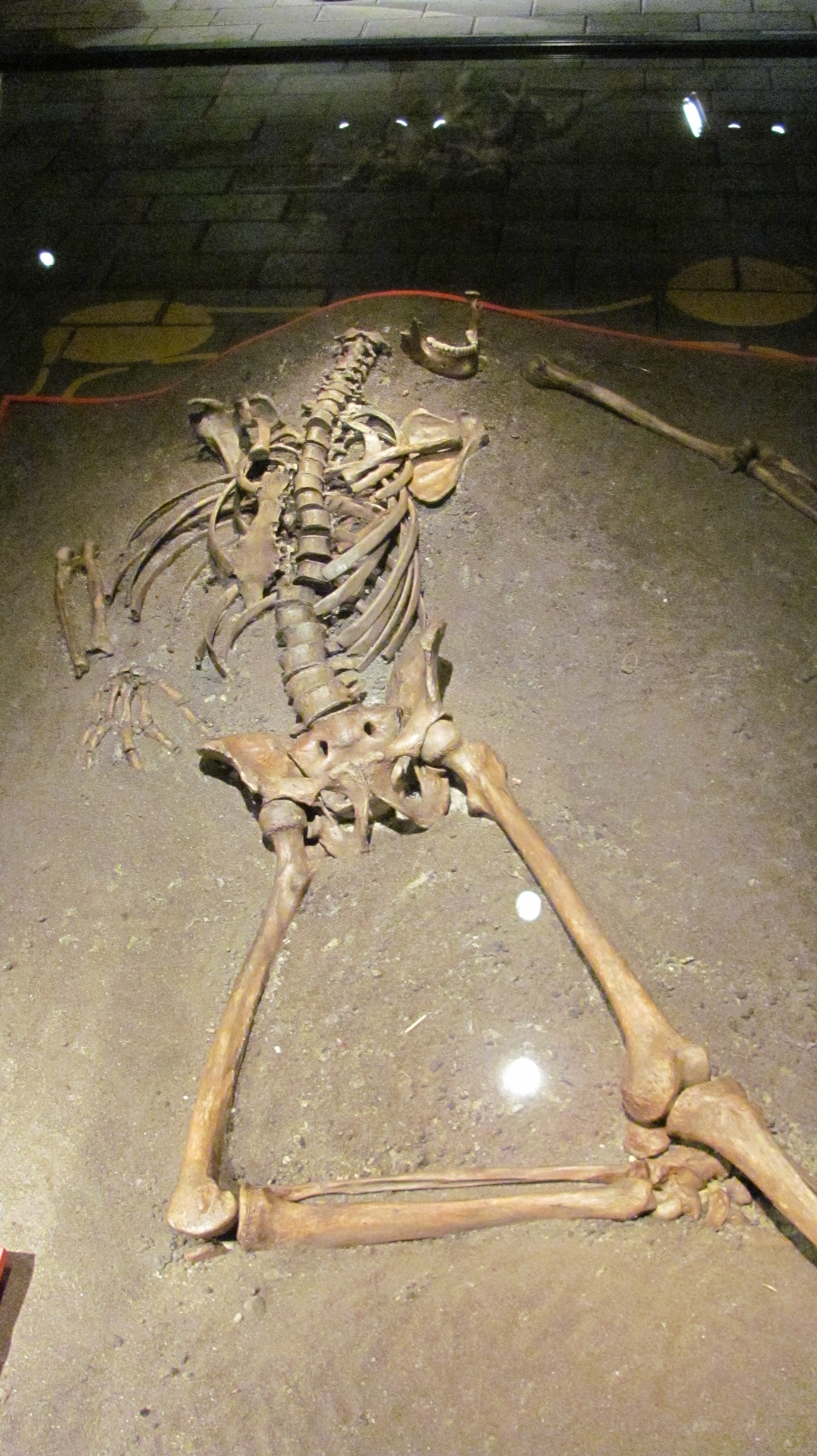 Viking Museum Skeleton