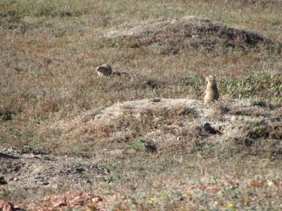 Prarie Dog Village