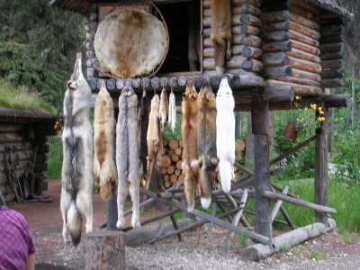 Pelts on Display