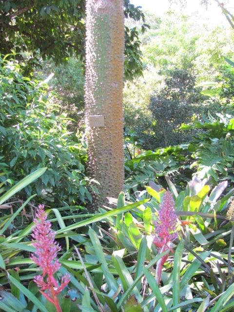 Spiny Barked Tree
